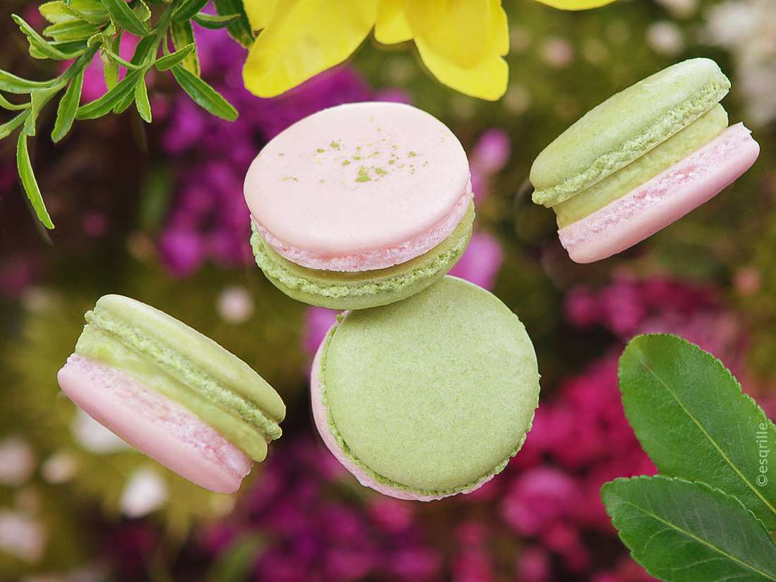 esqrille Macarons Food photography